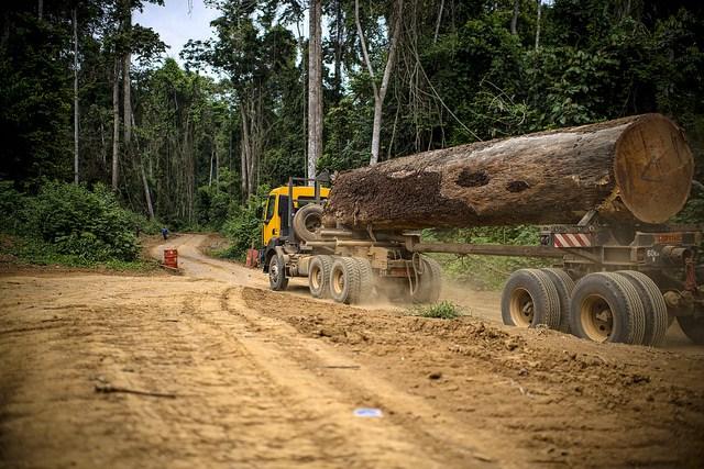 timber; logging, timber producers