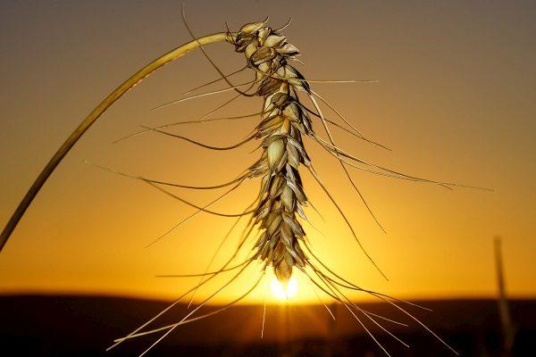 East Africa harmonises grain quality regulations